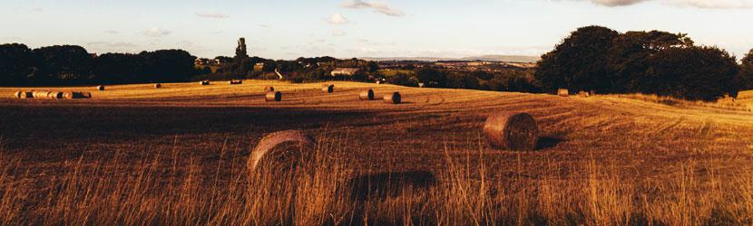 Equestrian,-Rural-&-Farm-Property
